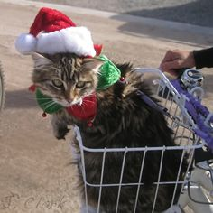 santa paws opted for a bike instead of reindeers this year...ho-ho-ho....