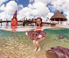 Snorkel en Cozumel, México, con Mantarrayas - http://revista.pricetravel.co/viaja-por-america/2017/03/28/snorkel-en-cozumel-mexico-con-mantarrayas/