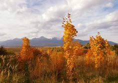 Mountains, Nature, Photos, Travel, Painting, Beautiful, Art, Art Background, Naturaleza