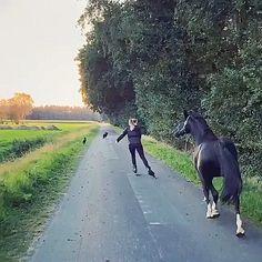 Most Beautiful Horses, Pretty Horses, Horse Love, Animals Beautiful, Funny Horse Videos, Funny Animal Videos, Cute Funny Animals, Animals And Pets, Baby Animals