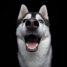 Cães Sorridentes                                                                                                                                                                                 Mais