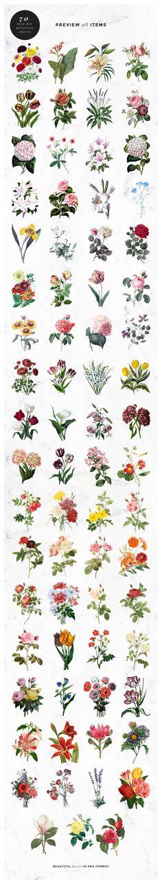 Vintage Botanical Images Illustrations, Flower Types