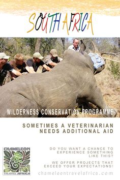 The Wilderness Conservation Programme is based on a private game reserve in the Limpopo province of South Africa. Surrounded by 25,000ha of natural African bush, preserving this beautiful area takes work and dedication from the full-time management and conservation team. This project needs enthusiastic, like-minded conservationists to assist in achieving their goal as a benchmark wilderness reserve. #wildlife #conservation #reserve #game #wilderness