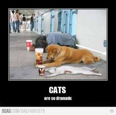 Cats...