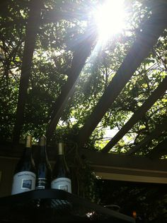Our sunlit arbor at Bowers Harbor Vineyards...