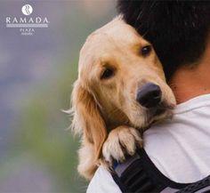 4 Ekim Hayvanları Koruma Günü Kutlu Olsun.  Happy World Animal Day, October 4th!