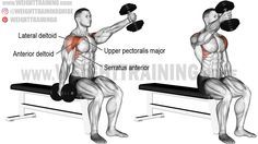 Seated alternating dumbbell front raise exercise