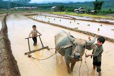 Pic.MegaFun.vn - Ảnh đẹp - Tuổi thơ hồn nhiên