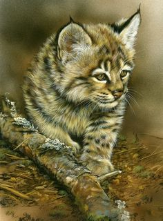 Baby Bobcat...I've lived in the foothills of the Smoky Mountains for many years and have yet to see a bobcat in the wild.