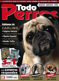 Revista TODO PERROS 214, portada de diciembre 2013. Hablamos de: carlino, volpino italiano, mastín español, border collie...