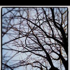 Light through branches