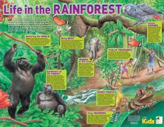 National Geographic Kids and Year of the Gorilla: Life in the Rainforest poster Rainforest Preschool, Rainforest Facts, Rainforest Project, Rainforest Habitat, Amazon Rainforest, Science Fair Projects, Projects For Kids, School Projects, Kids Crafts