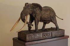 Duke tusker of Kruger National Park