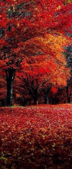 Photo of Autumn Season for fans of Autumn 37696335 Fall Pictures, Fall Photos, Pretty Pictures, Autumn Scenes, Autumn Aesthetic, All Nature, Fall Season, Beautiful Landscapes, Beautiful World