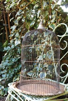BIRD CAGE & FRENCH WROUGHT IRONS WITH IVY Bird Cages, Bird Feeders, Irons, Hanging Chair, Wrought Iron, Ivy, French, Outdoor Decor, Blog