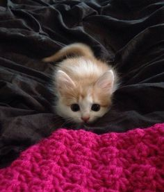 This itty-bitty kitty who's READY for her first pounce.