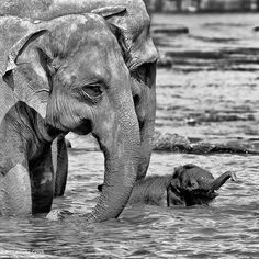 Elephant water play.