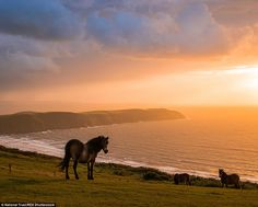 Serene: In second was the Devonshire coastline of Potters Hill and Woolacombe Down, where ...