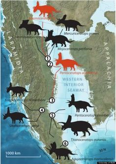 Western North America hosted a remarkable diversity of dinosaurs, and among the most diverse clades was the Chasmosaurinae, a group of large, horned dinosaurs.