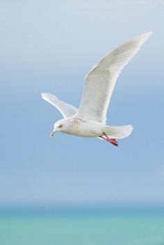 White seagull flying over water. Reminds me of summer, beach and careless vacation time.