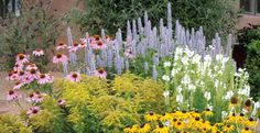 Pre-planned gardens: Low Water Plants, Eco Friendly Landscapes: High Country Gardens