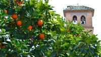 Frutta Urbana, più vitamine per tutti