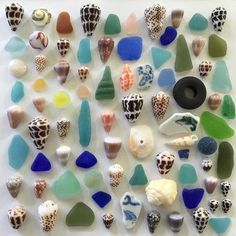 Kalakoa! (All kine colors). Always grateful for the variety of treasures found here. Weekend finds before the swell returns #hawaiinokaoi #hawaiishells #hawaiianshells #hawaiianseaglass #seamarbles #beachglass #seaglass #seashells #seashells