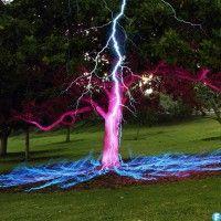 Lightning Hits the Tree
