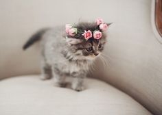 Image via We Heart It https://weheartit.com/entry/163993657 #adorable #aw #crown #cuddly #cute #flower #fluffy #grey #kitten