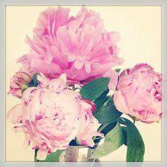 Flower power! #peonies #flower