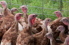 Ground-Breaking Animal Welfare Organic Rules Move Forward via Civil Eats #sustainable #food