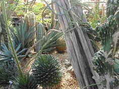 Desert beauties...