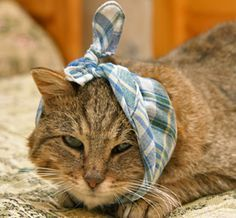 Pet Grief: Helping Pets Mourning a Human or Pet Companion Old Cats, Cats And Kittens, Crazy Cat Lady, Crazy Cats, I Love Cats, Cute Cats, Sick Cat Symptoms, Sick Kitten, Health Tips