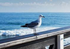 Bird, Beach, Photography, Animals, Photograph, Animales, The Beach, Animaux, Birds