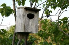 Simple Bird Houses to Make