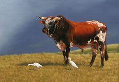 Nguni Bull Bull Painting, Iron Man Armor, Cow Art, Rind, Livestock, Cattle, Farm Animals, Dog Cat, Horses