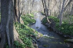 Spring River - Wall Mural & Photo Wallpaper - Photowall