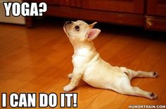 599450 350200768387305 1924621915 n Funny dog   Yoga I can do it