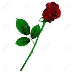 Rosa roja con tallo largo. Fondo Blanco. Ilustraciones Vectoriales.