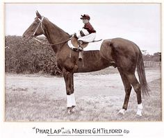 Phar Lap shows his beautiful temperament, standing patiently with 'Cappy' Telford, trainer Harry Telford's son, perched on his back in his racing colours.