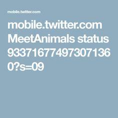 mobile.twitter.com MeetAnimals status 933716774973071360?s=09