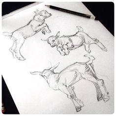 Baby Goat sketches #JAWCooper
