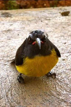 Real-life Angry Bird - lol, poor thing :)