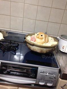 今夜はウサギ鍋です。