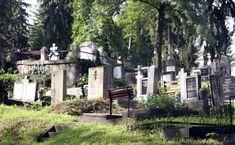Házsongárdi temető Plants, Plant, Planting, Planets