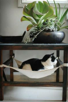 Kitty hammock - if you look carefully, you will see that the cat is facing a window. So place the table/hammock near a low window to keep kitty content for hours, soaking in rays and watching the world go by. I Love Cats, Crazy Cats, Here Kitty Kitty, Happy Kitty, Sleepy Kitty, Kitty Cats, Cat Furniture, Plywood Furniture, Furniture Projects