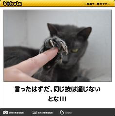 No, The same deathblow technique never goes back again. Animals And Pets, Funny Animals, Cute Animals, I Love Cats, Cute Cats, Japanese Funny, Cat Boarding, Funny Animal Pictures, Pretty Cats