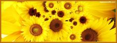 Get our best Bright Sunflowers facebook covers for you to use on your facebook profile.