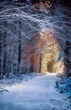 Enchanted Forest, Seattle, Washington