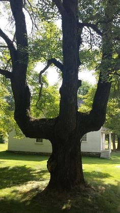 What Is An Indian Marker Tree, And How Were They Used?